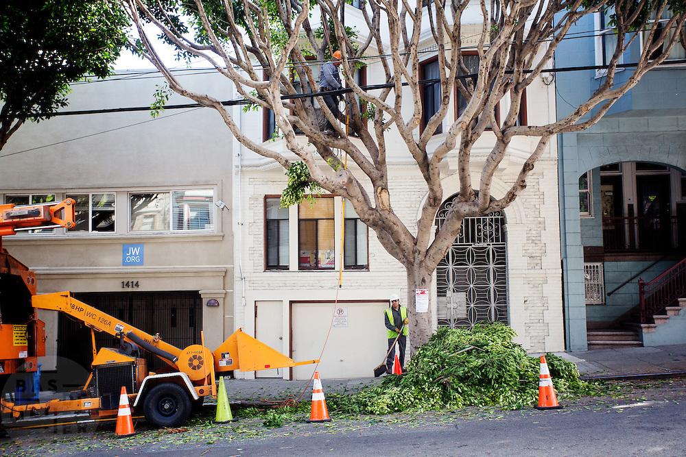Onderhoud aan bomen in San Francisco. De Amerikaanse stad San Francisco aan de westkust is een van de grootste steden in Amerika en kenmerkt zich door de steile heuvels in de stad.<br /> <br /> Tree maintainance in San Francisco. The US city of San Francisco on the west coast is one of the largest cities in America and is characterized by the steep hills in the city.