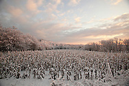 Pocatello, NY - A cornfield on the morning after a snowstorm on Dec. 6, 2009.