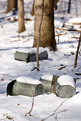 23 February 2008: collection containers, complete with clothes-pined pitched covers, sit on the snow covered ground in the maple grove waiting to be placed on the end of a yet to be inserted spigot to collect the sap from the trees.