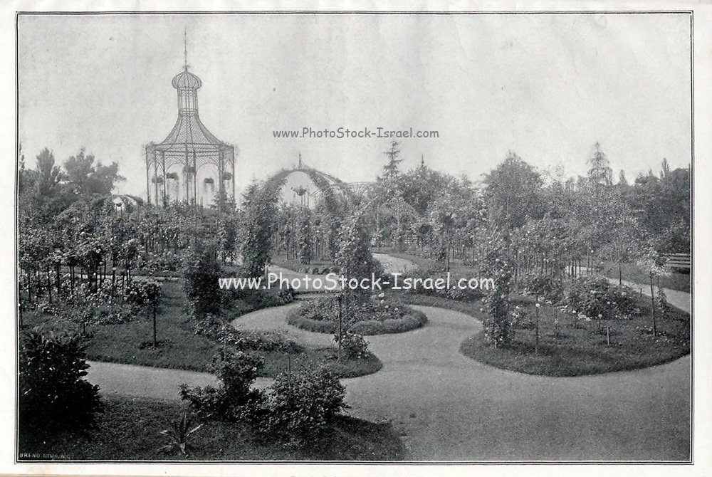 Black and white Photograph of a Rose Garden from 1900. Appeared in the Rosen-Zeitung, Organ des Vereins Deutscher Rosenfreunde, 1887 [Periodical of the German Rose Society (Vereins Deutscher Rosenfreunde)] by C. P. Strassheim
