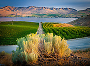 Vineyard in Chelan, Washington, with Lake Chelan below