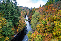 Perthshire, Scotland, United Kingdom. 21 October, 2017. Spectacular autumn colours in natural woodland on banks of River Garry at historic Pass of Killicrankie near Pitlochry.