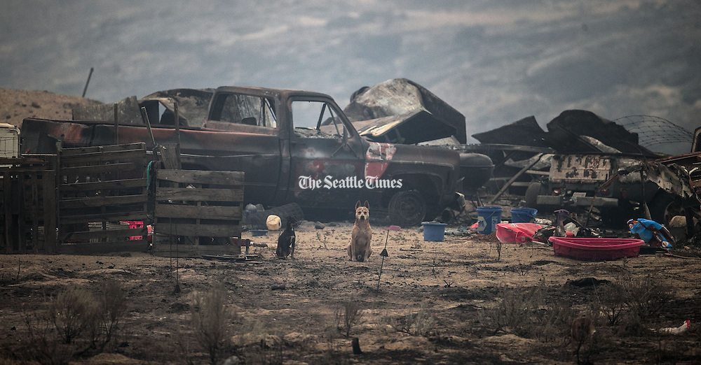 Two dogs remain on a heavily damaged property along McLaughlin Canyon Road in Riverside, Okanogan County, Saturday August 22, 2015, after a wildfire ripped through the area.<br /> <br /> Bettina Hansen / The Seattle Times