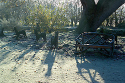 Sunlight casting shadows on a frosty morning in winter. Woven hazel deer sculptures and wooden bench