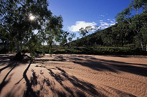 Australia, Dried river bed near Alice Springs.