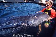 baby sperm whale, Physeter macrocephalus, is cared for by Dolphin Quest employee after stranding & being brought to fish farm for rehabilitation, Kona, Hawaii, USA