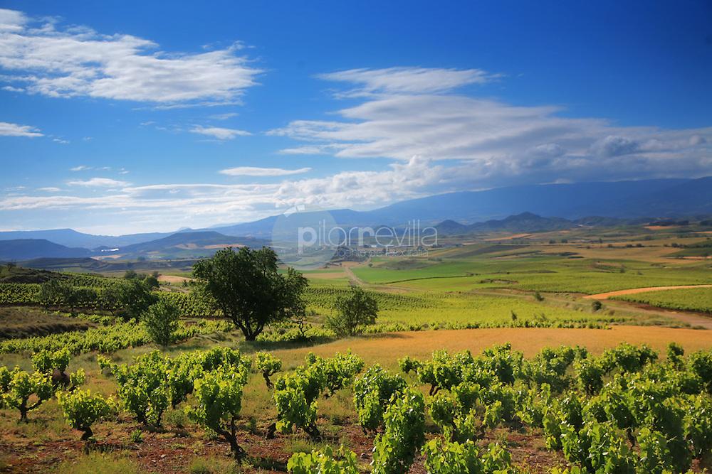 Viñedos. La Rioja ©Daniel Acevedo / PILAR REVILLA