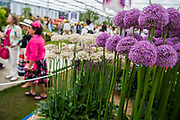 Flowers on the WS Warmenhoven stand - The Chelsea Flower Show organised by the Royal Horticultural Society with M&G as its MAIN sponsor for the final year. London 23 May, 2017