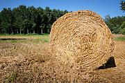Charmes sur l'Herbasse Drôme, Frankrijk - augustus 2021: Een veld met opgerolde balen hooi. | Charmes sur l'Herbasse Drôme, France - August 2021: A field with rolled bales of hay.