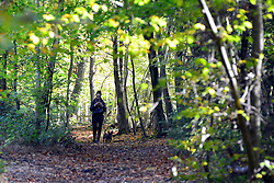 © Licensed to London News Pictures. 04/11/2013. Burnham, UK A woman walk a dog in the leaves. Autumn sunshine through the trees at Burnham Beeches, South Buckinghamshire on MONDAY 4TH NOVEMBER. The beeches covering 220 hectares is primarily noted for its ancient beech and oak pollards. Photo credit : Stephen Simpson/LNP