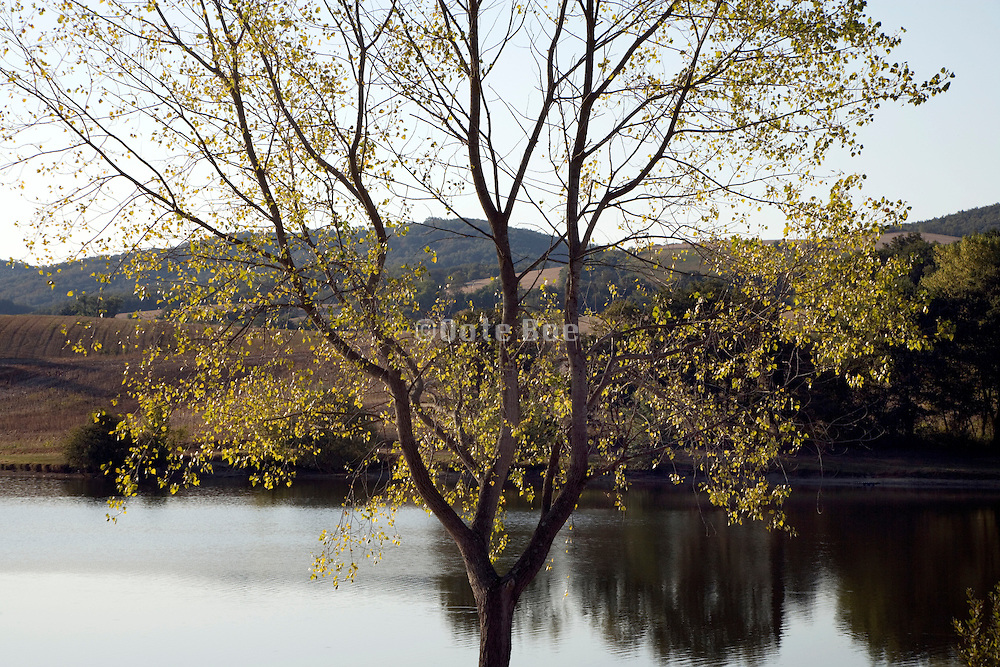 tree with some leaves at the edge of a lake
