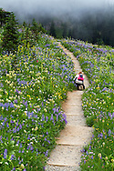 A Photographer kneels to photograph the wildflower display at Tipsoo Lake in Mount Rainier National Park, Washington State, USA