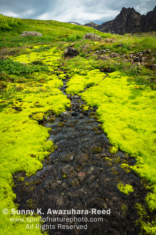 Hidden Creek flows among bright green moss in Hidden Valley. The Wedge peak is in the background. Chugach State Park, Southcentral Alaska, Summer. Vertical image.
