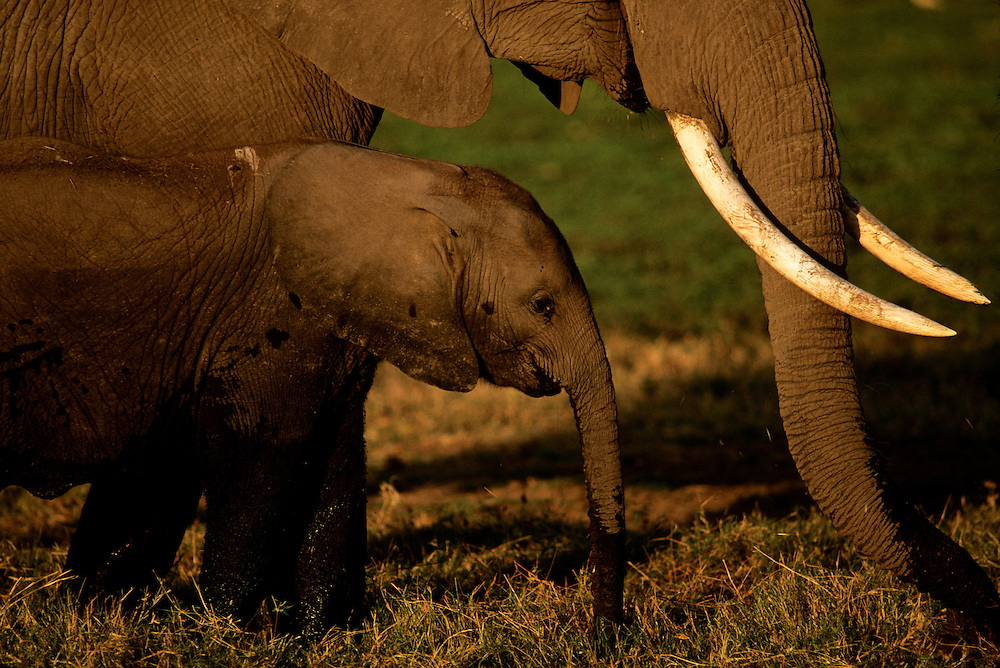 A mother and baby elephant on the grassland.