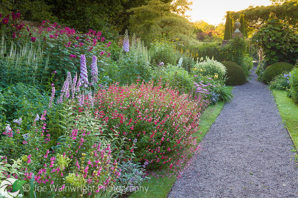 The main perennial border at Wollerton Old Hall Garden, Wollerton, Shropshire - featuring plants such as: Delphinium 'Conspicuous', Salvia involucrata 'Bethellii', Salvia jamensis 'Hot Lips' as well as a range of other perennials including Veronicastrum, Phlox, Agapanthus and Achillea. Photographed in July.