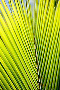Geometric design of palm frond