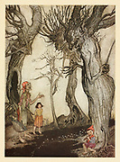 The Trees and the Axe from the book ' Aesop's fables ' Published in 1912 in London by Heinemann and in  New York by Page Doubleday Illustrated by Arthur Rackham,
