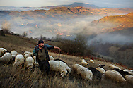 A Romanian sheep herder and his sheep on an early morning in the countryside region of Maramures