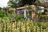 Sisyrichium stratium (Pigroot) Cirsium and Delphinium in the formal garden at Hindringham Hall, Hindringham, Norfolk, UK