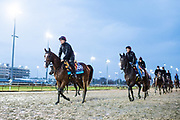 November 1-3, 2018: Breeders' Cup Horse Racing World Championships. Anthony Van Dyck (IRE)