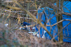 "© Licensed to London News Pictures. 09/12/2019. Gerrards Cross, UK. A police officer conducts a finger tip search of ground in woodland as the Metropolitan Police Service continues a search operation in Gerrards Cross, Buckinghamshire. Police have been in the area conducting operations on Hedgerley Lane since Thursday 5th December 2019. In a press statement issued on 7th December a Metropolitan Police spokesperson said ""Officers are currently in the Gerrards Cross area of Buckinghamshire as part of an ongoing investigation.<br /> ""We are not prepared to discuss further for operational reasons."" No further updates have been issued. Photo credit: Peter Manning/LNP"