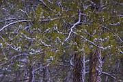 Snowstorm, Arapahoe National Forest, Front Range, Colorado