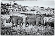 06-11-2017 Foto's genomen tijdens een persreis naar Buffalo City, een gemeente binnen de Zuid-Afrikaanse provincie Oost-Kaap. Inkwenkwezie Private Game Reserve - Witte neushoorns