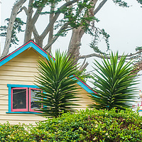 Cypress trees, tower over a house in Moss Beach, California.
