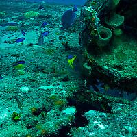 Top of Wheelhouse, Doc Paulson, Grand Cayman