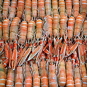 Langoustines (Scottish prawns) from Loch Dunvegan at The Three Chimneys Restaurant, Colbost, on the Isle of Skye. Chef and director Michael Smith and his kitchen team, create dishes which reference Scotland's rich culinary heritage and wealth of ingredients. Their menus reflect the variety of Skye's natural larder from the land and sea.