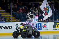 KELOWNA, CANADA - OCTOBER 27: Rocky Racoon, the mascot of the Kelowna Rockets' enters the ice against the Tri-City Americans on October 27, 2017 at Prospera Place in Kelowna, British Columbia, Canada.  (Photo by Marissa Baecker/Shoot the Breeze)  *** Local Caption ***