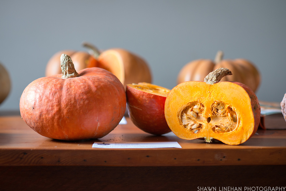 """A variety of winter squash at Culinary Breeding Network's """"Squash Party"""""""