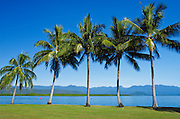 Palm trees, blue sky and the mountains in Port Douglas, Queensland, Australia. <br /> <br /> Editions:- Open Edition Print / Stock Image