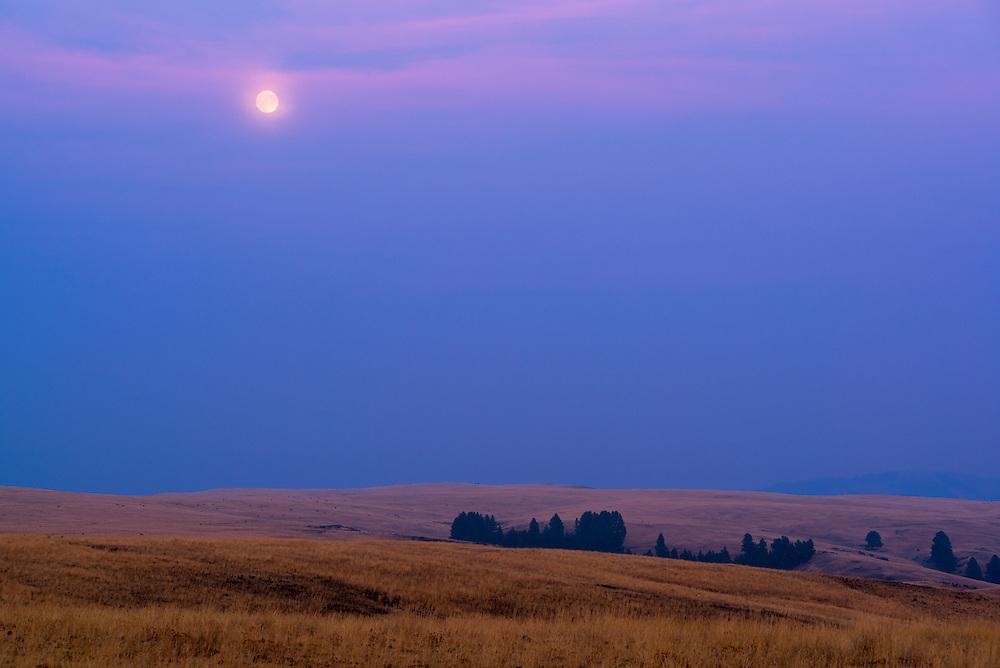 Full moon over Oregon's Zumwalt Prairie.  A large herd of elk is grazing in the distance.