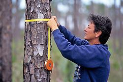 Lisu Derungs Measuring Tree