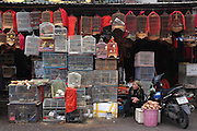 © Licensed to London News Pictures. 01/01/2012. An elderly shop keeper looks after her stall selling caged birds at a makert in Hanoi,  Vietnam. Photo credit : Stephen Simpson/LNP