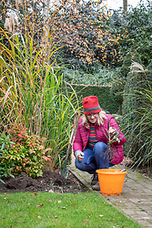 Planting bare root roses. Soaking roots in a bucket of water before planting.