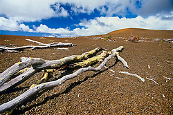 """'Ohi'a Lehua tree skeletons, remains of once-flourishing 'Ohi'a and tree fern Hapu'u native rainforest, Pu'u Pua'i, a cinder cone at distance that formed during the 1959 eruption at Kilauea Iki Crater, meaning """"gushing hill"""", off Devastation Trail, Hawaii Volcanoes National Park, Big Island, Hawaii, USA"""