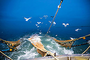 Seagulls hover behind the boat waiting for the small fish to be returned to the sea.  Luke is a Folkestone based fisherman out trawling for a 12 hour night shift on a fishing trip in his boat Valentine FE20, Hythe Bay, the English Channel, United Kingdom.