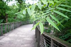 Texas Native Forest Boardwalk at Fort Worth Botanic Garden,Fort Worth, Texas, USA.