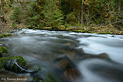 The gentle rapids along Lillian River gave a soft backdrop to my camp.
