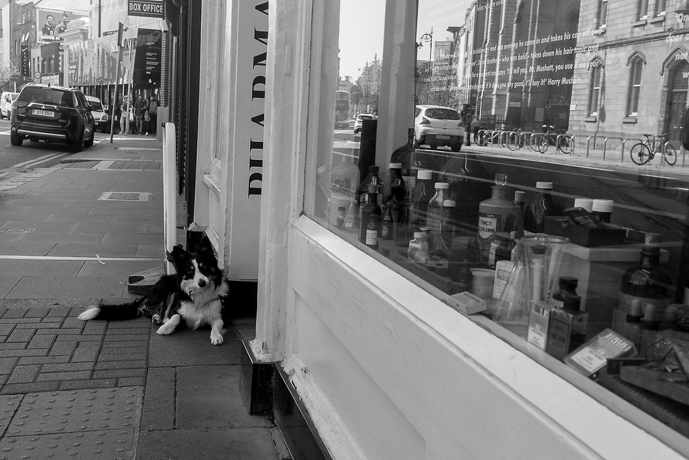 Waiting for his master to retun from teh apothecary, Dublin, Ireland.