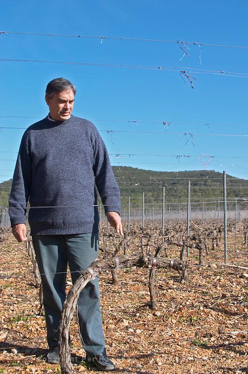 Christian Mocci Domaine de Mas de Martin, St Bauzille de Montmel. Gres de Montpellier. Languedoc. Vines trained in Cordon royat pruning. Owner winemaker. In the vineyard. France. Europe.