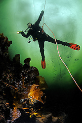ice diving, scuba ice diver with safety rope under ice, Russia, White Sea, MR