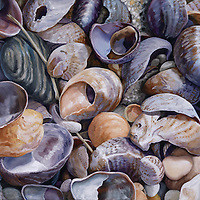 Violet slipper shells contrast with yellow and orange jingle shells, coming together in a painting that harmonizes and energizes. <br /> SOLD.  Prints available upon request.