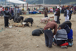 Pigs For Sale, Otovalo Market