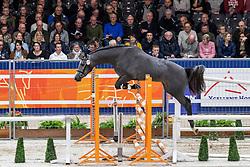 171, Monte Verdi<br /> KWPN hengstenkeuring - 's Hertogenbosch 2020<br /> © Hippo Foto - Dirk Caremans<br /> 29/01/2020