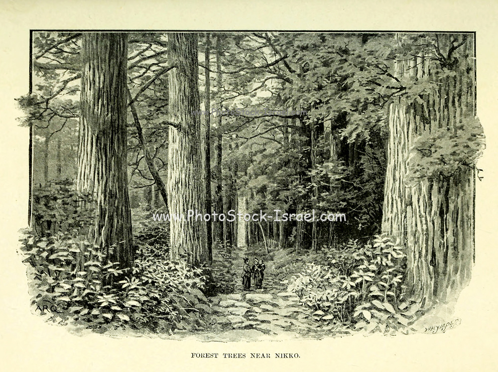Forest Trees near Nikko from the book ' Rambles in Japan : the land of the rising sun ' by Tristram, H. B. (Henry Baker), 1822-1906. Publication date 1895. Publisher New York : Revell