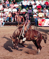 Cowboy Rodeo Rider on Bronc, Fort Qu'Appelle Rodeo, Saskatchewan