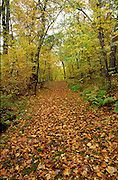 Leaves on grassy trail through mixed forest, St. Croix Wild River State Park, Minnesota